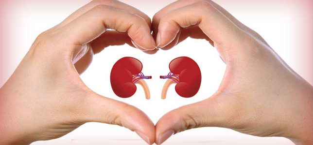 What-are-the-best- foods-for-kidney- function