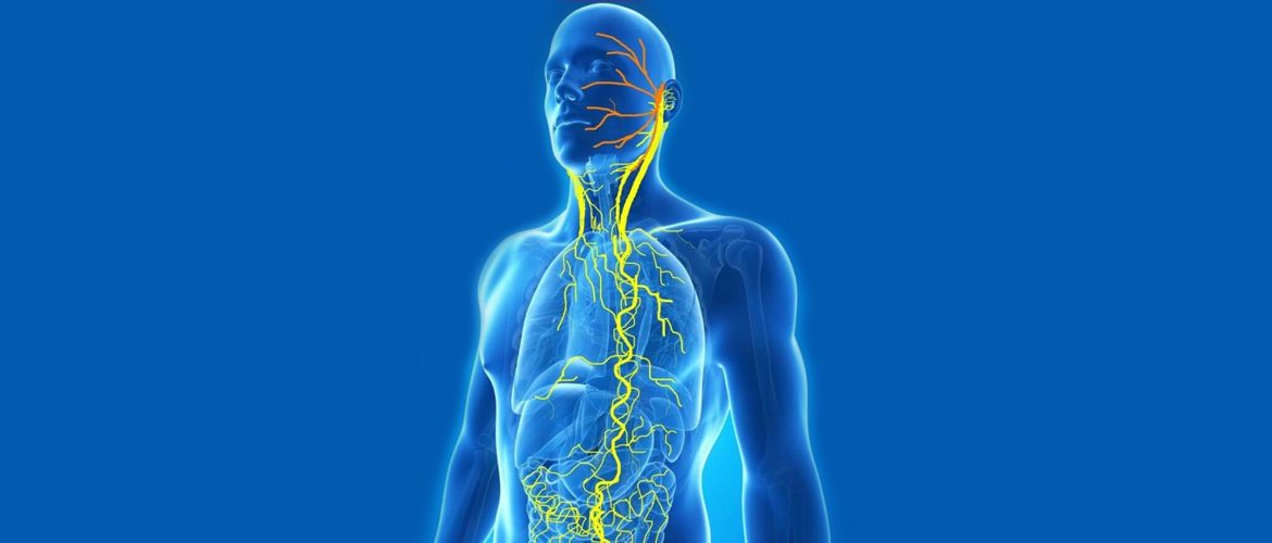 What Is the Importance of the Vagus Nerve for Health and Weight Loss