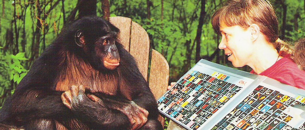 Should-Humans-Learn-from-Chimps-on-Healthy-Aging